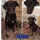 Adopt A Pet :: AJAX