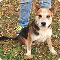 Adopt A Pet :: Rudy - Texico, IL