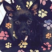 Adopt A Pet :: Daisy - Lodi, CA