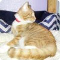 Adopt A Pet :: Soloman - Englewood, FL