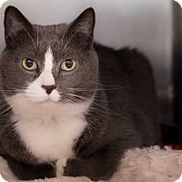 Adopt A Pet :: Chanel - Staten Island, NY