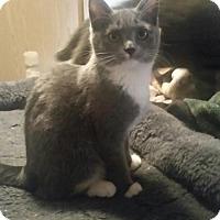 Adopt A Pet :: Annie - Battle Ground, WA