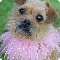 Adopt A Pet :: Josephine - Glastonbury, CT
