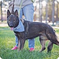 Adopt A Pet :: Griffin - Adoption Pending - Houston, TX