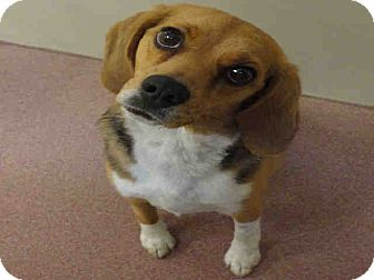 Beagle Mix Dog for adoption in North Ogden, Utah - Rosie