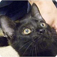 Adopt A Pet :: Sky - Naples, FL