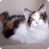 Adopt A Pet :: K-MaryG3-Sasha - Colorado Springs, CO