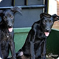 Adopt A Pet :: Dory and Drew - Albany, NY
