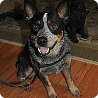 Adopt A Pet :: Jack - Conway, AR