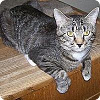 Adopt A Pet :: Grant - Scottsdale, AZ