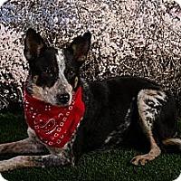Adopt A Pet :: Oakley - Tallahassee, FL