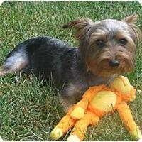 Adopt A Pet :: Max - Carmine, TX