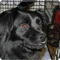 Adopt A Pet :: Tess - in Maine! - kennebunkport, ME