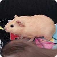 Adopt A Pet :: Emmylou - Fullerton, CA