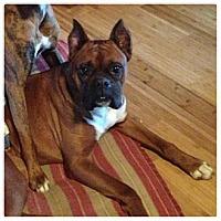 Adopt A Pet :: Ugg - Springfield, MO