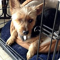 Adopt A Pet :: Annie - The Village, FL
