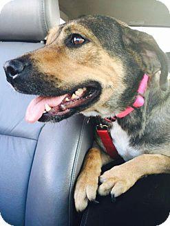Serenity Dog Adoption