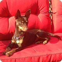 Adopt A Pet :: Haleigh - Sacramento, CA