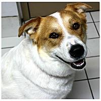 Adopt A Pet :: Trisha - Forked River, NJ