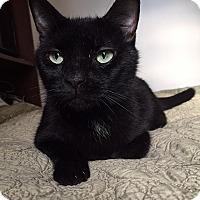 Adopt A Pet :: Xotic - New York, NY