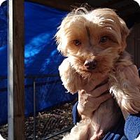 Adopt A Pet :: Moose - Crump, TN