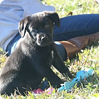 Adopt A Pet :: Roederer - Destrehan, LA