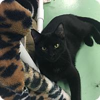 Adopt A Pet :: Steven - Gadsden, AL