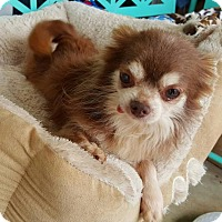 Adopt A Pet :: Ziggy - Scottsboro, AL