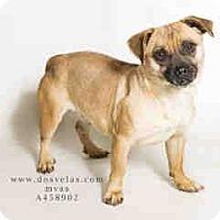 Adopt A Pet :: Tavona - Anaheim, CA
