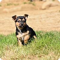 Adopt A Pet :: Benatar - Groton, MA
