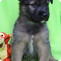 Adopt A Pet :: Tigger - Irvine, CA