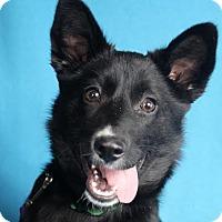 Adopt A Pet :: Jazzy - Minneapolis, MN