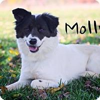 Adopt A Pet :: Molly - Joliet, IL