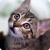 Adopt A Pet :: Athos - Troy, MI