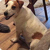 Adopt A Pet :: Suzi in San Antonio/Seguin - San Antonio, TX
