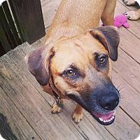 Adopt A Pet :: Brennan - greenville, SC