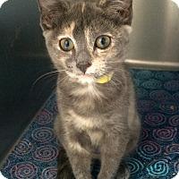 Adopt A Pet :: Bitzy - Lunenburg, MA