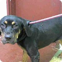 Adopt A Pet :: ENVY - Atlanta, GA