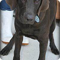 Adopt A Pet :: Elroy - Beaumont, TX
