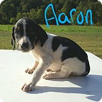 Adopt A Pet :: Aaron - Niagra Falls, NY
