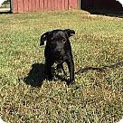 Adopt A Pet :: Bitsey
