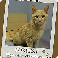 Adopt A Pet :: FORREST - Lincoln, NE