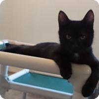 Adopt A Pet :: Darwin - Geneseo, IL