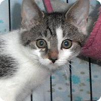 Adopt A Pet :: Lady - Furlong, PA