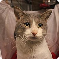 Adopt A Pet :: Beny - Jerseyville, IL