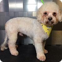 Adopt A Pet :: Matthew Nelson - McKinney, TX