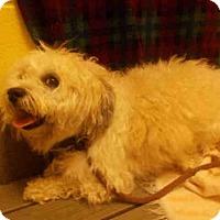 Adopt A Pet :: SNOOPY - Upper Marlboro, MD