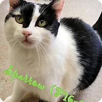 Adopt A Pet :: Sparrow - Tiffin, OH