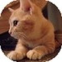 Adopt A Pet :: Mandarin - Vancouver, BC
