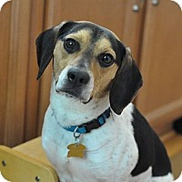 Adopt A Pet :: Tucky - Novi, MI